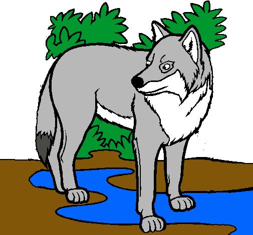 Dibujo De Lobo Pintado Por Hendrick En Dibujosnet El Día 29 04 11 A