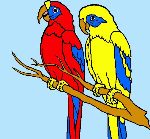 Dibujo De Loros Pintado Por Guacamayas En Dibujosnet El Día 28 04
