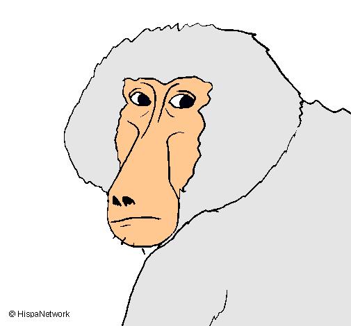 Dibujo de Babuino pintado por Palmdan en Dibujos.net el día 12-06-11 ...