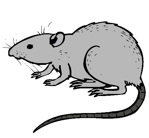dibujo de rata subterráena pintado por raton en dibujos net el día