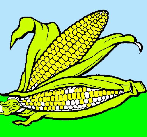 Dibujo De Mazorca De Maiz Pintado Por Tottoto En Dibujos Net El Dia