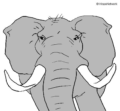 Dibujo De Elefante Africano Pintado Por Elefantes En Dibujosnet El