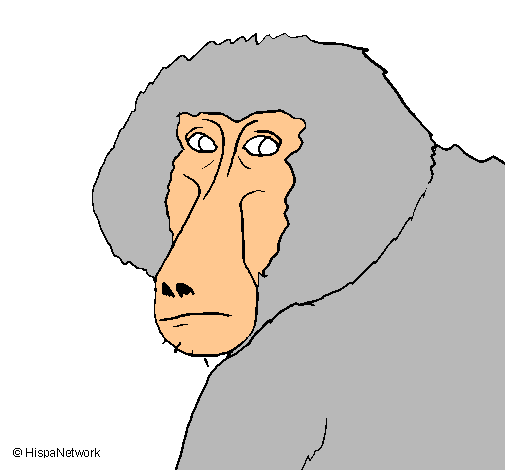 Dibujo de Babuino pintado por Mico en Dibujos.net el día 07-11-11 a ...