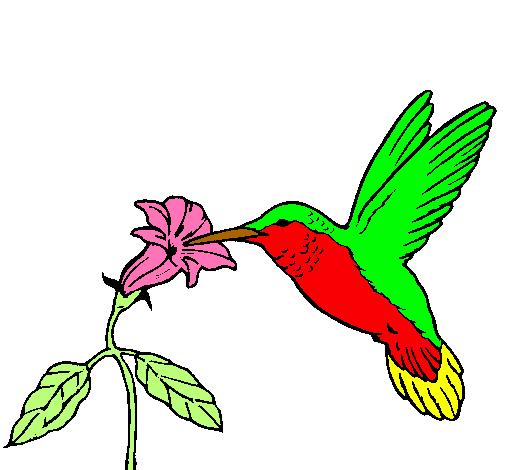 Dibujo de Colibrí y una flor pintado por Picaflor en Dibujos.net el ...