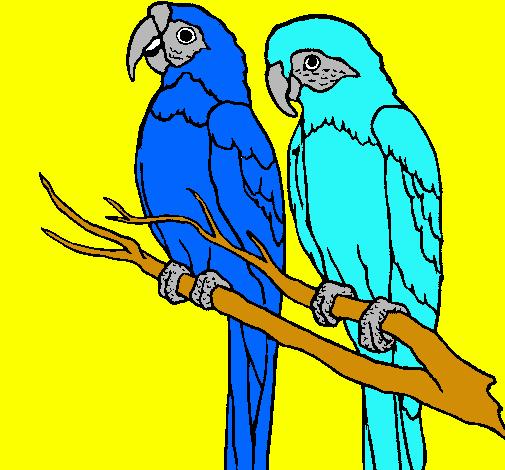 Dibujo De Loros Pintado Por Guacamayas En Dibujosnet El Día 01 02