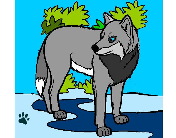 Dibujos De Lobos Para Colorear Dibujosnet