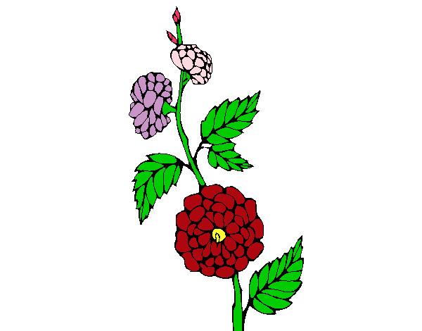 Dibujo De Rama Con Flores Pintado Por Alcatonito En Dibujosnet El