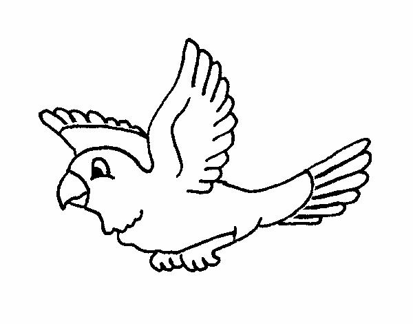 Dibujo de Periquito pintado por en Dibujos.net el día 19-04-15 a las ...