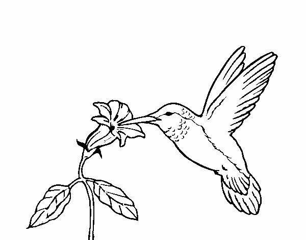 Dibujo de Colibrí y una flor pintado por en Dibujos.net el día 21-04 ...