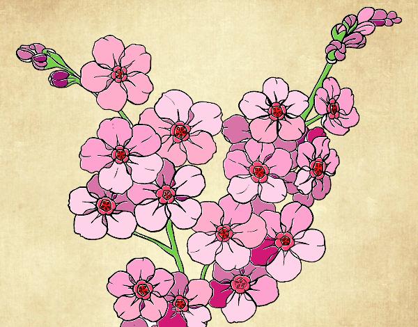 Dibujo De Flor De Cerezo Pintado Por En Dibujosnet El Día 07 05 15