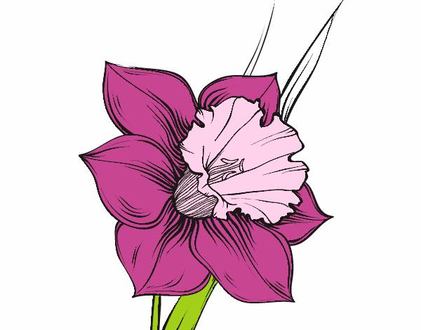 Dibujo De Flor De Narciso Pintado Por En Dibujosnet El Día