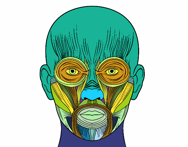 Dibujo de Músculos de la cara pintado por en Dibujos.net el día 27 ...