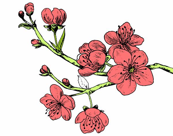 Dibujo De Flor De Cerezo Para Colorear: Dibujo De Rama De Cerezo Pintado Por Linda Cl En Dibujos