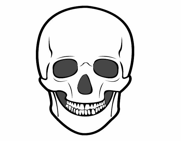 Dibujo De Cráneo Humano Pintado Por En Dibujosnet El Día 10 10 15 A