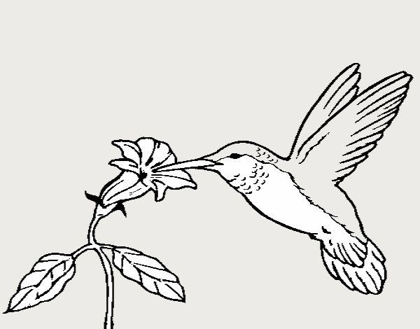 Dibujo de Colibrí y una flor pintado por en Dibujos.net el día 23-04 ...