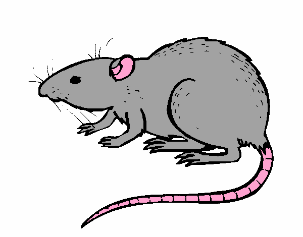 Dibujo De Mi Rata Que Esta Loca Pintado Por En Dibujos.net