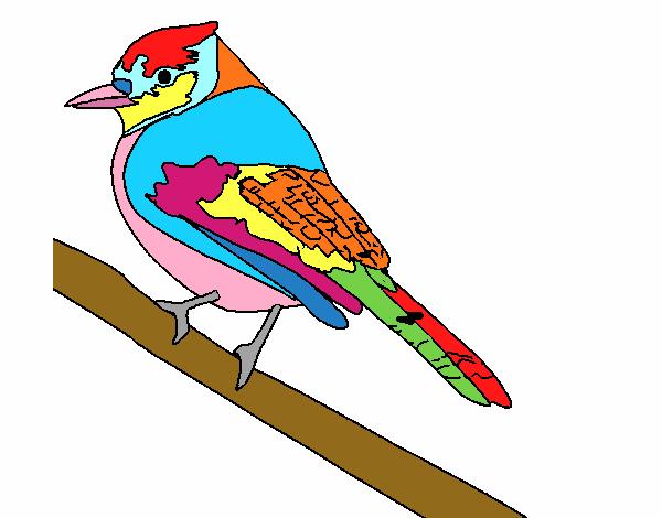 Dibujo de Pájaro tropical pintado por en Dibujos.net el día 07-05-16 ...