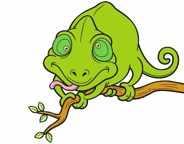 Dibujo de Camaleón en una rama pintado por en Dibujos.net el día ...