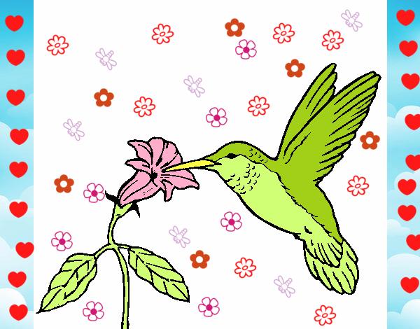 Dibujo de Colibrí y una flor pintado por Mika57613 en Dibujos.net el ...