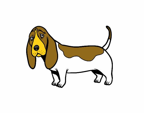 Dibujo De Un Basset Hound Pintado Por En Dibujosnet El Día 14 10 16