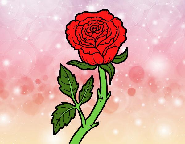 Dibujo De La Rosa De Guadalupe Pintado Por En Dibujosnet El Día 30