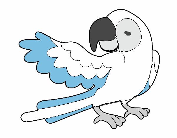 Dibujo de Loro con ala abierta pintado por en Dibujos.net el día 16 ...
