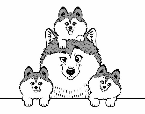 Dibujo de Familia Husky pintado por en Dibujos.net el día 09-06-17 a ...