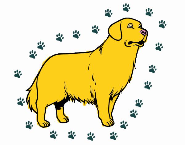 Dibujo De Perro Golden Retriever Pintado Por En Dibujosnet El Día
