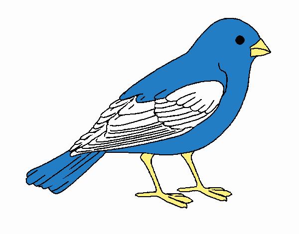 Dibujo de Gorrión pintado por en Dibujos.net el día 29-09-17 a las ...