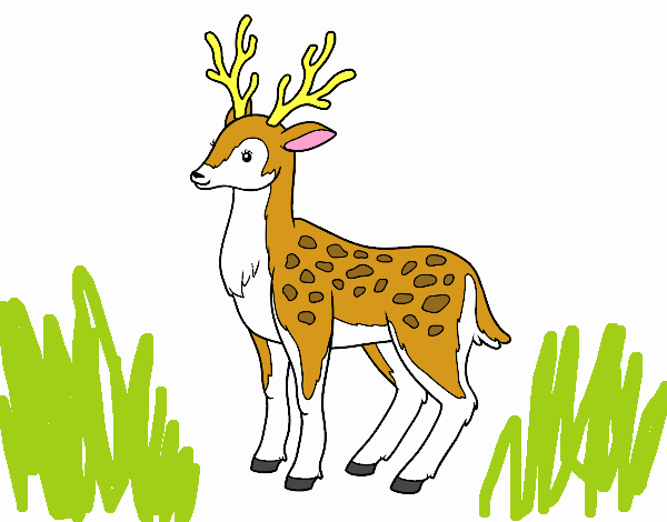 Dibujo De Venado Come Pasto Pintado Por En Dibujosnet El Día 13 10