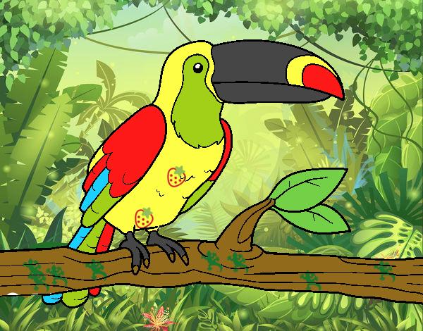 Dibujo De Tucan En La Selva Tropical Pintado Por En Dibujosnet El