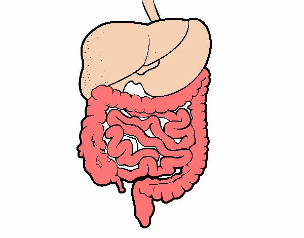 Dibujo De Sistema Digestivo Pintado Por En Dibujosnet El Día 15 11