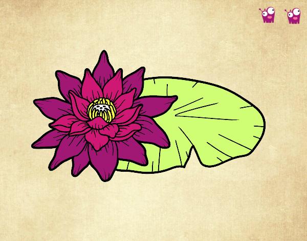 Dibujo De Una Flor De Loto Pintado Por En Dibujosnet El Día 02 02