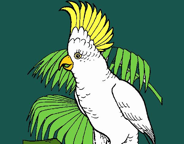 Dibujo De Cacatúa Pintado Por En Dibujosnet El Día 26 03 18