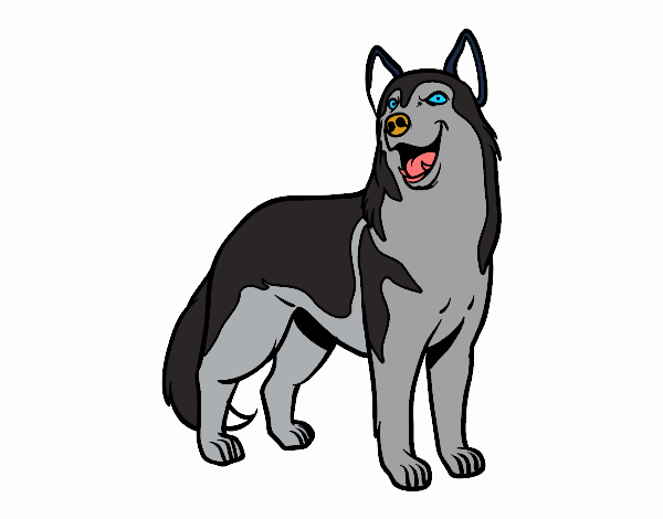 Dibujo De Perro Lobo Pintado Por En Dibujos Net El Dia 14 04 18 A