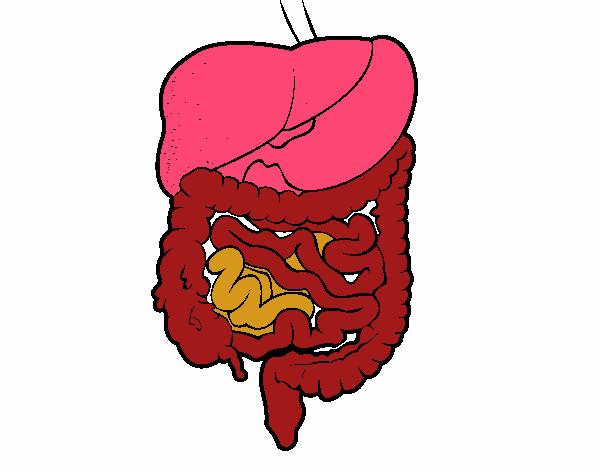 Dibujo de Sistema digestivo pintado por en Dibujos.net el día 27-04 ...
