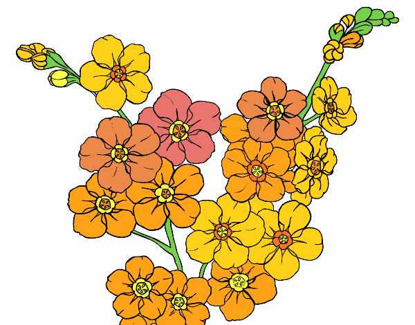 Flor De Lis Dibujo Fondos De Pantalla