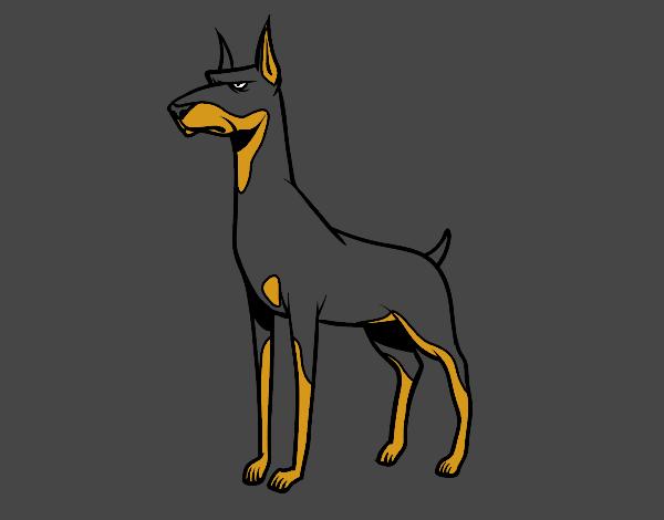 Dibujo De Perro Dóberman Pintado Por En Dibujosnet El Día 26 05 18