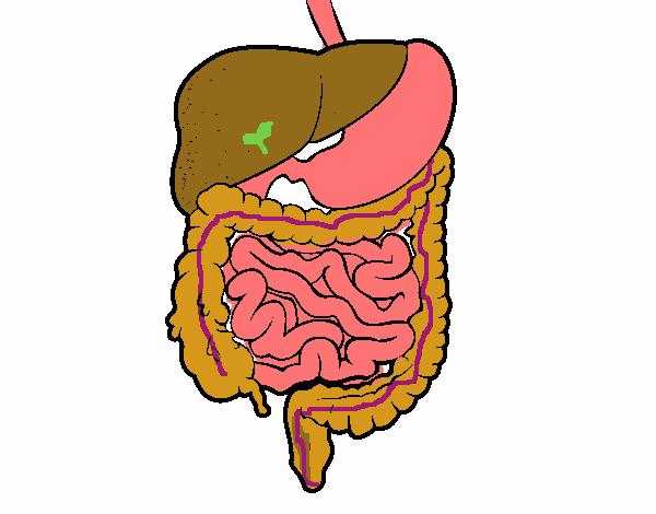 Dibujo de Sistema digestivo pintado por en Dibujos.net el día 25-05 ...