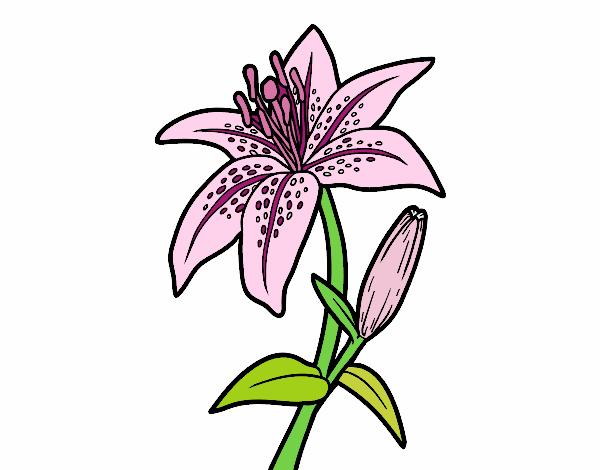 Dibujo De Un Lirio Pintado Por En Dibujosnet El Día 26 05