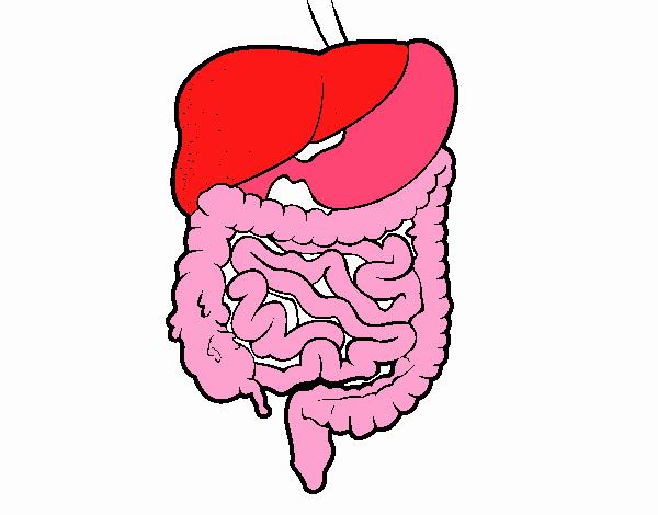 Dibujo De Sistema Digestivo Pintado Por En Dibujosnet El Día 10 06