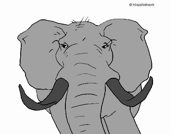 Dibujo De Elefante Africano Pintado Por En Dibujosnet El Día 13 06