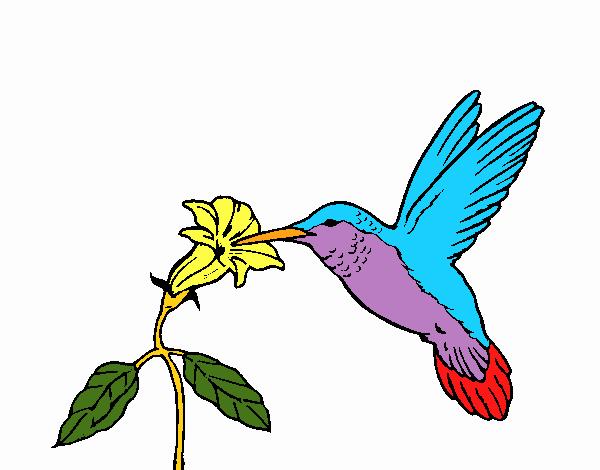 Dibujo de Colibrí y una flor pintado por en Dibujos.net el día 15-07 ...