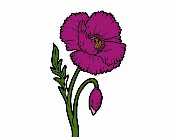 Dibujo de Una flor de amapola pintado por en Dibujos.net el día 16 ...