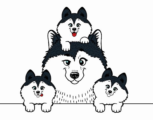 Dibujo de Familia Husky pintado por en Dibujos.net el día 24-09-18 a ...