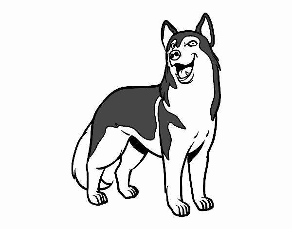 Dibujo De Perro Lobo Pintado Por En Dibujosnet El Día 21 10 18 A