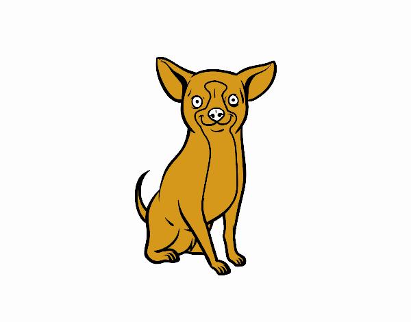 Dibujo de Perro chihuahua pintado por en Dibujos.net el día 31-10-18 ...