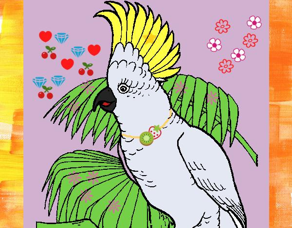 Dibujo De Cacatúa Pintado Por En Dibujosnet El Día 08 11 18