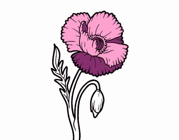 Dibujo De Una Flor De Amapola Para Colorear Dibujos Net