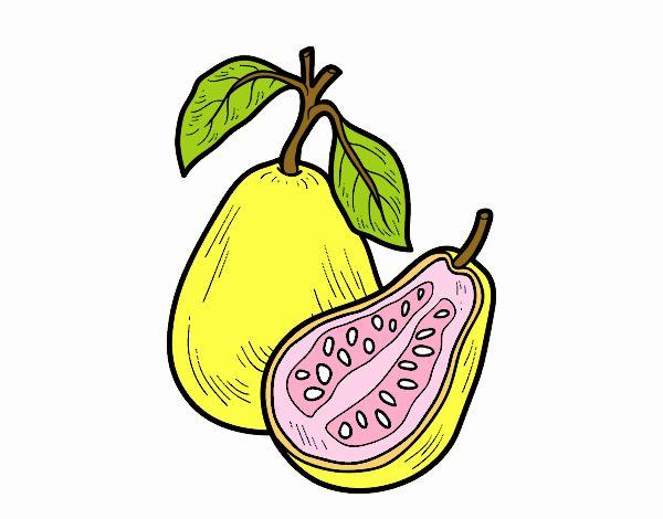 Dibujo De Fruta Exótica Guayaba Pintado Por En Dibujosnet